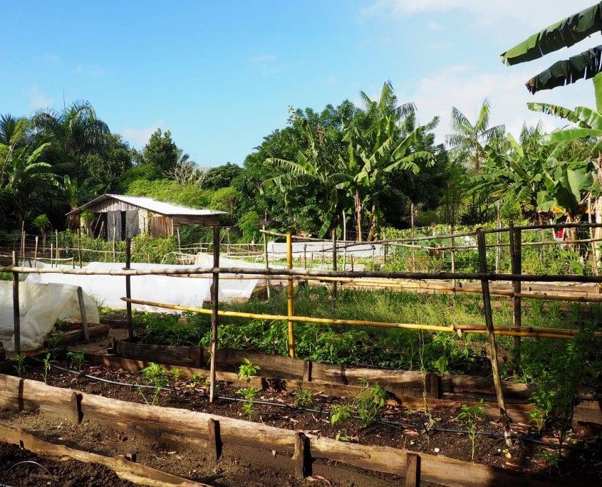 Taino Organic Farm permaculture aquaponic