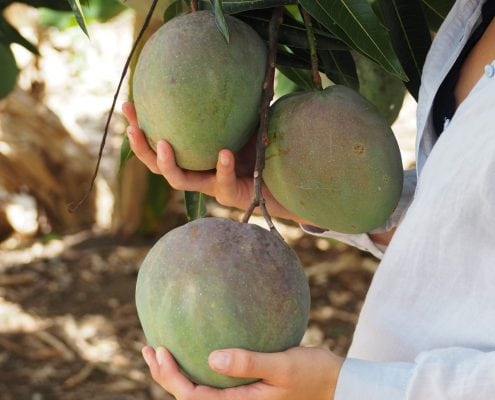 fruits of the dominican republic