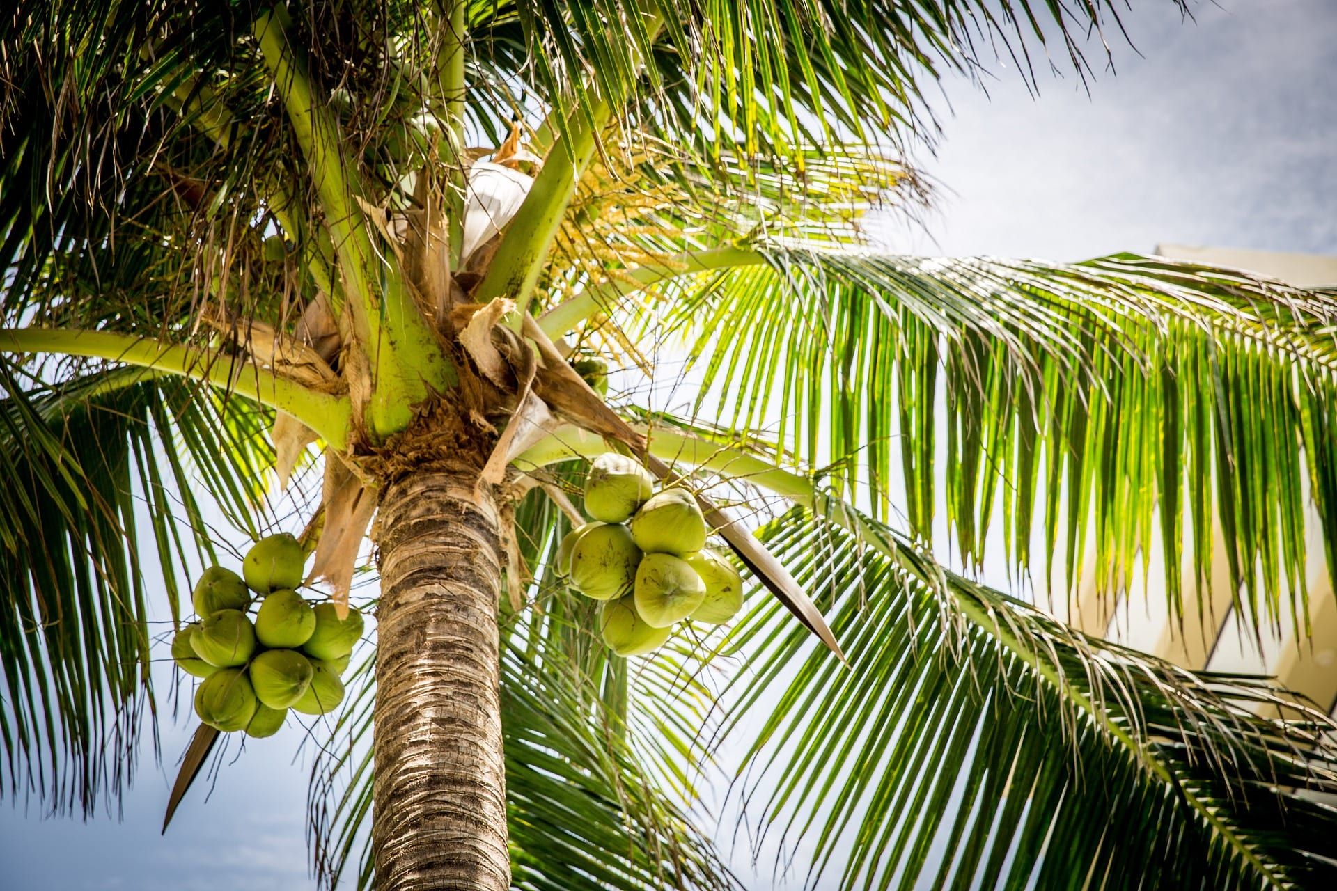 coconut water- yoga loft - yoga retreats